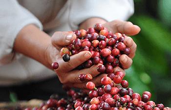 Dolce Gusto Nescafé nachhaltiger Kaffee