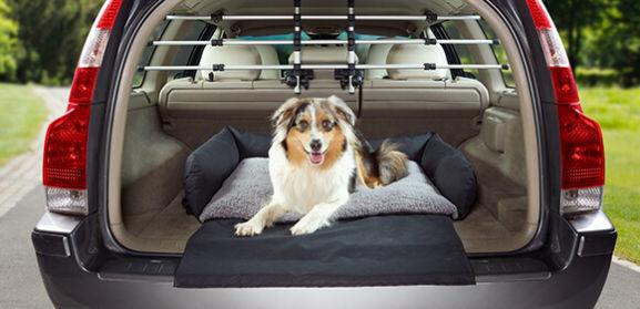 haustiere hund im auto