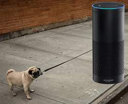 Amazon Echo Defizite
