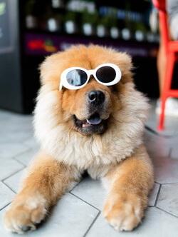 Brillen ohne Sehstaerke modisch