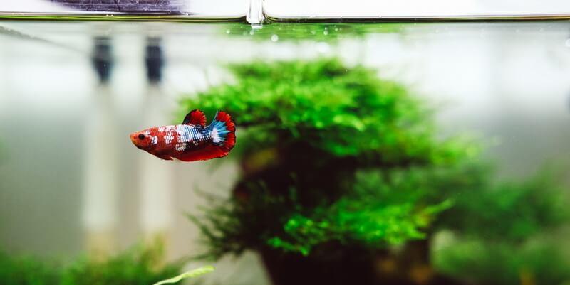zooplus Aquarium