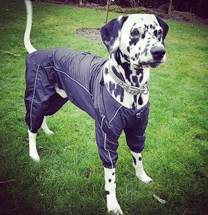 BaMuR Hundemantel