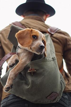Rucksack Volumen Groesse Hund