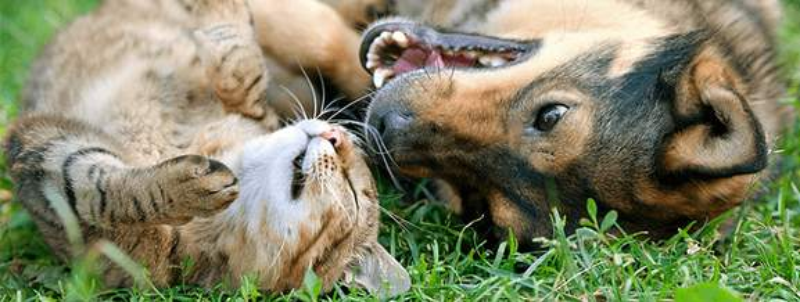 zooplus Hund und Katze
