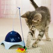 haustiere katzenspielzeug