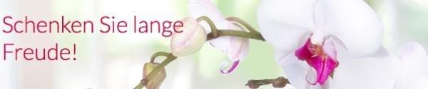 Valentins Lang haltbare Blumen