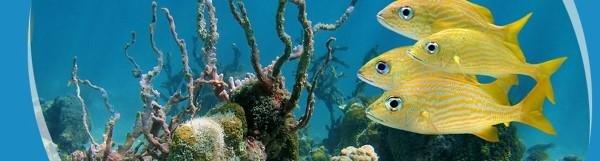 Fischfutter und andere Aquaristik