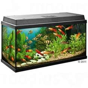 Juwel Rekord 800 Aquarium Komplettset - 110 Liter - für 97,84 € inkl. VSK bei [Zooplus]