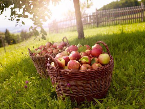 Lokal - Berlin : Tag des deutschen Apfels....