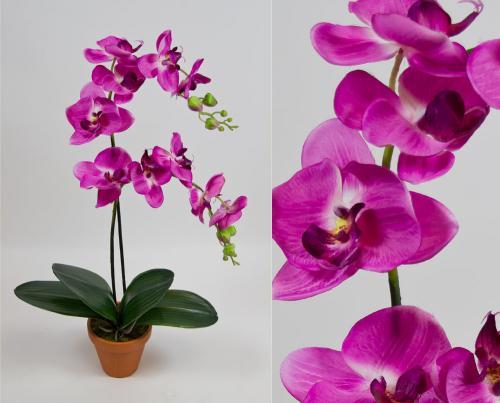 Gartentreff Ellwangen 25-26.01 Orchideen umsonst Umtopfen lassen