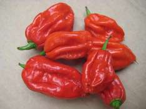 Aktuelle Chilisaison, sehr günstiges und gutes Saatgut [Versand aus Spanien!]