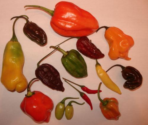 Extreme Chili Samen - 4 Sorten 60 Samen