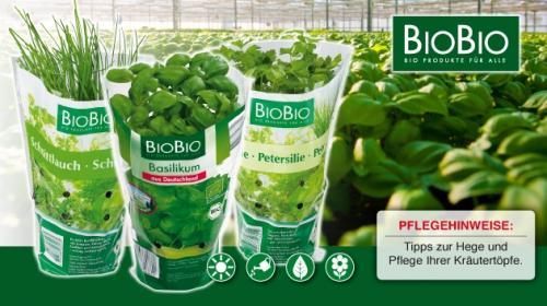 Bio Kräuterpflanzen 99 Cent im Netto