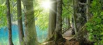 Am Sa. den 08.06. zu REWE radeln und damit einen Baum pflanzen