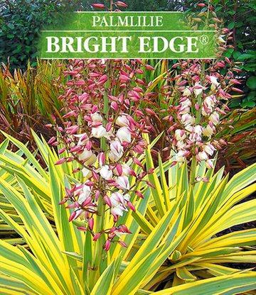Yucca Bright Edge (winterhart) // 2,90 € zzgl. Versandkosten (5,95€)