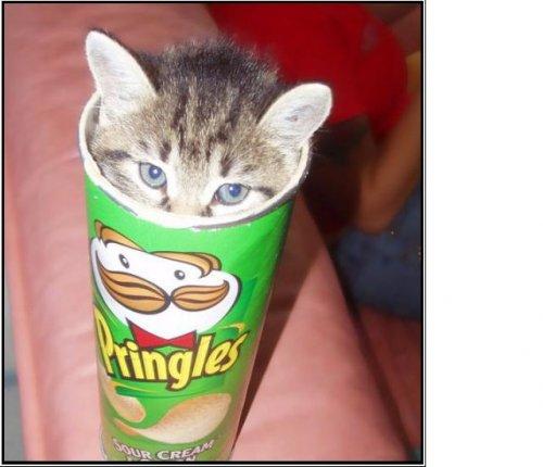 LOKAL - Oldenburg / aktiv irma: Pringles für 1,11€; Bacardi (auch Oakheart) für 8,88€; Kiste Veltins für 8,88€