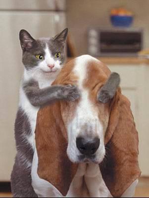 ROYAL CANIN -Testpaket für Hund & Katz'