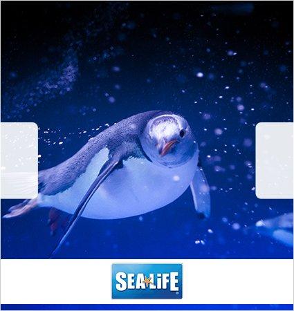 Sealife Eintritt für 1 Erwachsenen ab 9€ @Limango