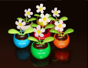 Gute-Laune-Blume! DIESMAL WIRKLICH BILLIG