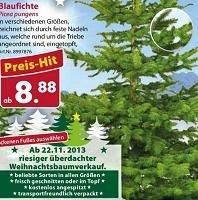 Weihnachtliches Angebot: Blaufichte für 8,88€ bei Dehner