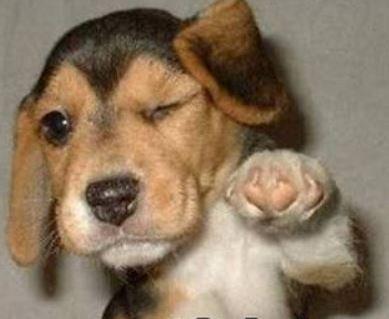 kostenlose Hundefutter Probe von happy Dog versandkostenfrei