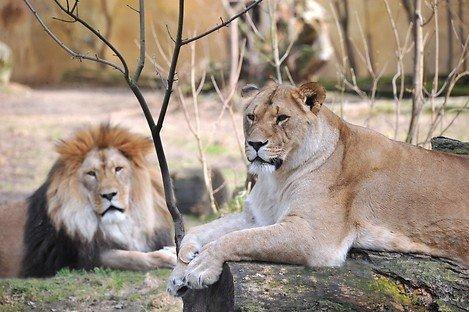 (Lokal Rostock) - 50% auf ein Familienticket im Zoo Rostock