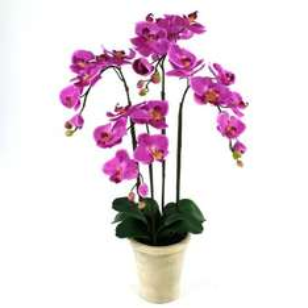 (Lokal Hamburg) große Orchideen 50-60cm für 4,99€, über 70% sparen!
