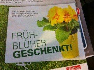 Gratis Frühblüher bei Höffner am 11 +12.4