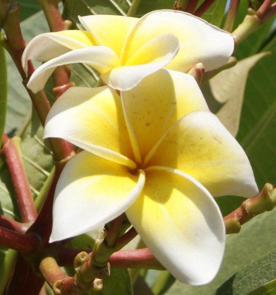 Flüge: Kombireise Neuseeland, Tahiti und Kalifornien 1474,- € gesamt (Oktober - Mai)
