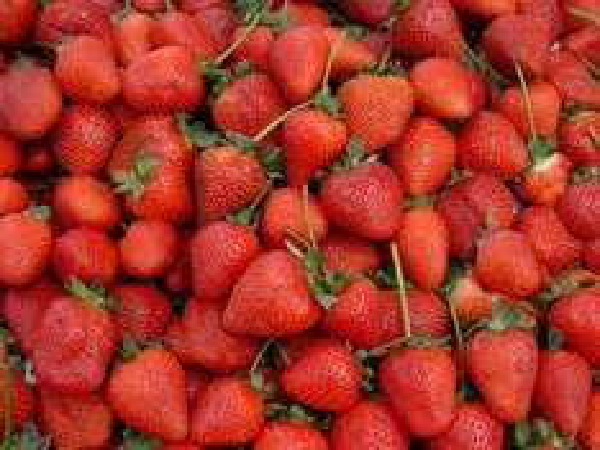 [Lidl offline] Erdbeeren 500g für 0,79€