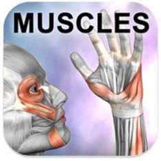 """Gratis Android-App """"Learn Muscles: Anatomy"""""""