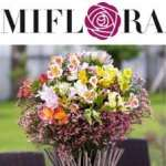 """MIFLORA Blumenversand – Inkalilien-Strauß LYRA € 19,90 + versandkostenfrei statt € 35,80 mit Code """"MI-RU-1014"""" bis 15.08.2014"""