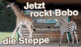 Groupon: Tageskarte für den Zoo Safaripark Stukenbrock