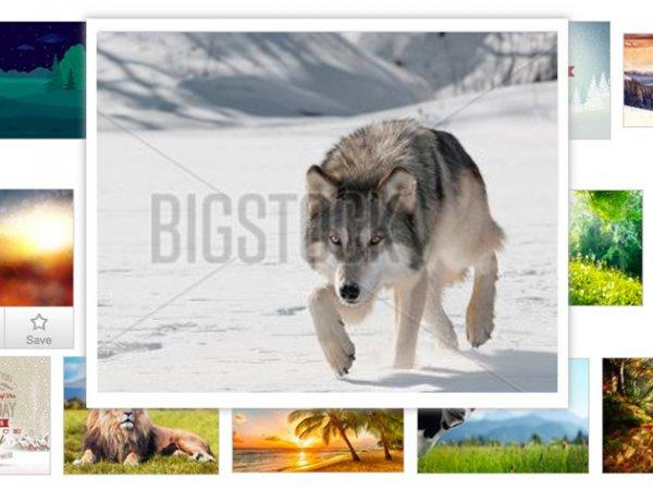 100 Bigstock Bilder für 0 € (Stockfotos und Vektorgrafiken, royalty-free)