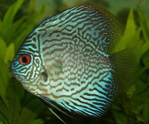 Tetra: 3 ausgewählte Aquaristikprodukte kaufen, nur 2 bezahlen