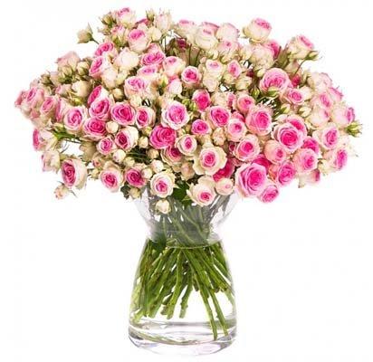 [Miflora] Rosen-Rallye: 30-70 Rosenblüten für 17,90€