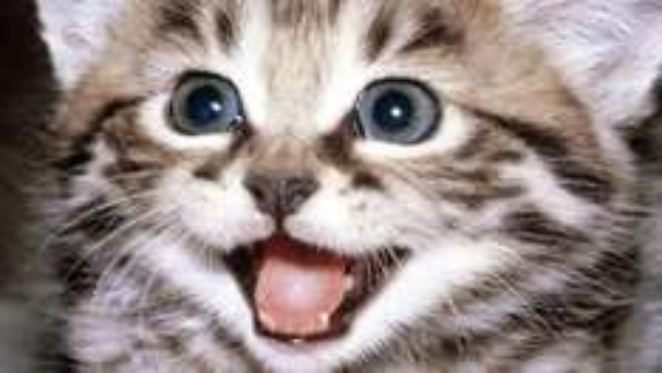 Happydog/Happycat - Hunde/Katzenfutter-Proben Kostenlos