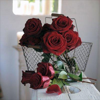10 schwarze Rosen  zu Halloween für 24,90 €