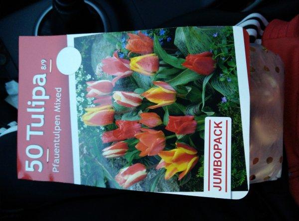 Blumenzwiebeln 70% Rabatt bei Bauhaus