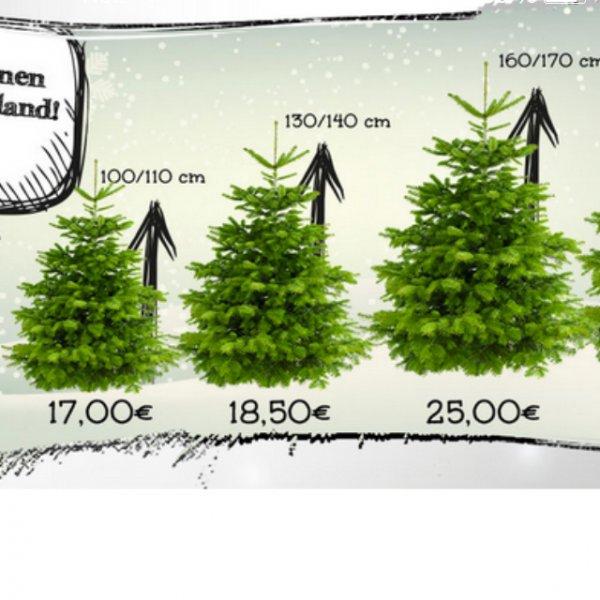 Premium Weihnachtsbäume: Nach Hause liefern lassen mit -10% Rabatt