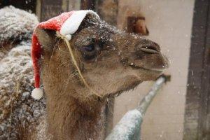 [lokal - Zoo Osnabrück] Kinder haben am Heiligabend freien Eintritt
