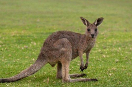 Flüge: One-Way nach Australien: Prag-Perth 310,- € - Frankfurt-Sydney 462,- € (z.B. für Work&Travel oder selbstgebautes RTW-Ticket - Abflüge Januar-März)