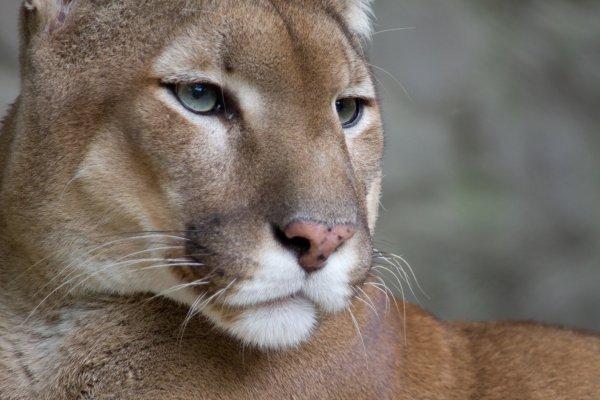 6er Pack Puma Herren Boxershorts @ Amazon für 24,99€