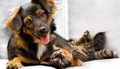 ARAS Gratis Hundefutter oder Katzenfutter Probe