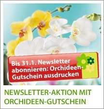 [Lokal] Newsletter-Aktion: Gratis Orchidee (Wert: 11,99€) bei Tropica in Kriftel