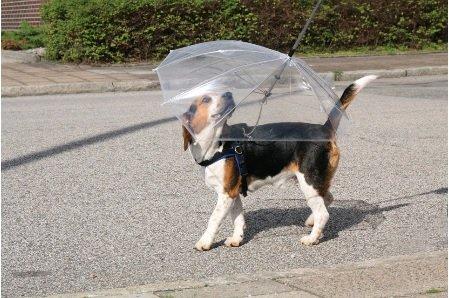 """Für Hundstage ,der Regenschirm für unseren Liebling. Raumduft """"Nasser Hund"""" ade!"""