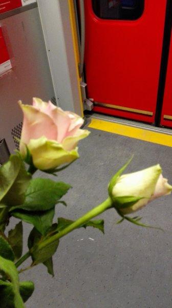 [LOKAL MUC] kostenlose Rosen