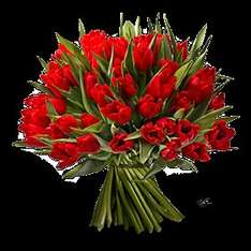 [EDEKA] 50 Tulpen für nen Zehner (10eu)