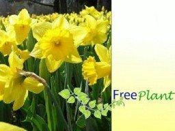 Verschiedene Blumensamen gratis bestellen [freeplant.net]