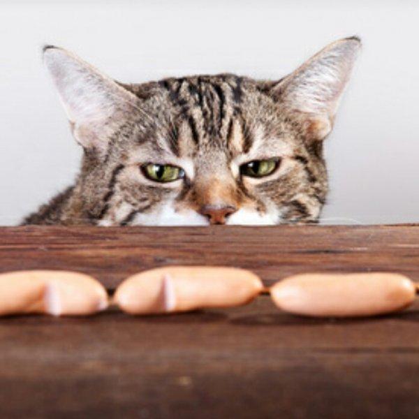 [reebate] Katzenfutter mit diversen Sofort-Rabatt-Coupons kostenlos kaufen und zusätzlich bis zu 1,05€ Gewinn machen durch 3x 0,35€ Cashback! (nur für Android)